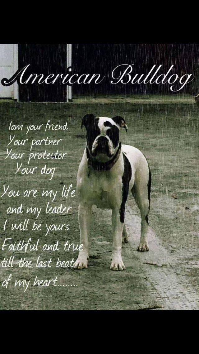 American Bulldog Poem With Images American Bulldog Bulldog