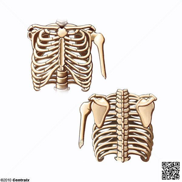 imgenes del cuerpo humano sin nombres  El cuerpo humano  Pinterest