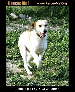 Uk Dog Rescue Adoptions Rescueme Org Rescue Dogs Dogs
