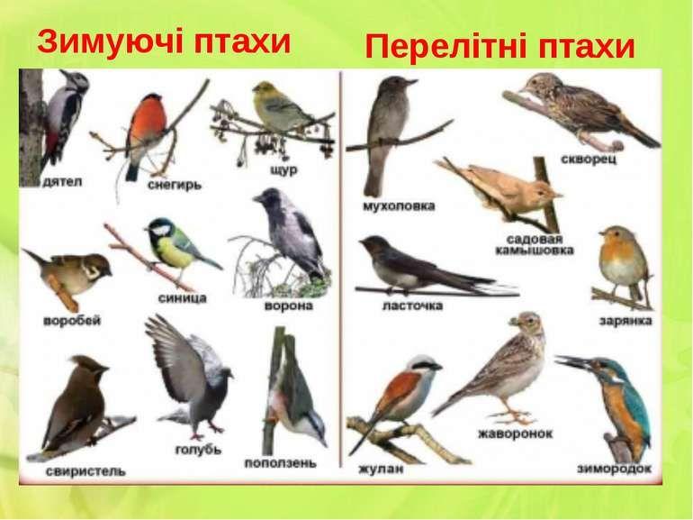 Пов'язане зображення | Тварини, Птахи, Осінь