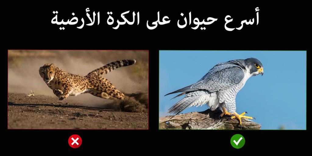 من المتداول بين الناس أن أسرع حيوان على الأطلاق هو حيوان الفهد و لكن هذه المعلومة ليست صحيحة في هذا المقال نتعرف على أسرع حيوان على الكرة Animals Parrot Bird