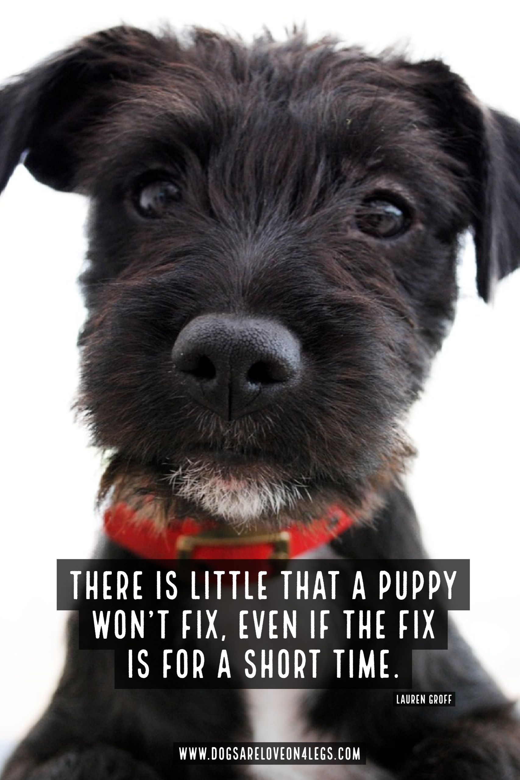 Dog Quote There Is Little That A Puppy Won T Fix Dog Dog