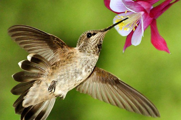 Hanging Flower Baskets That Attract Hummingbirds : Learn how to plant a container garden attract