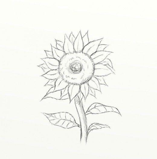 Do you like sunflowers? Learn how to draw a beautifully