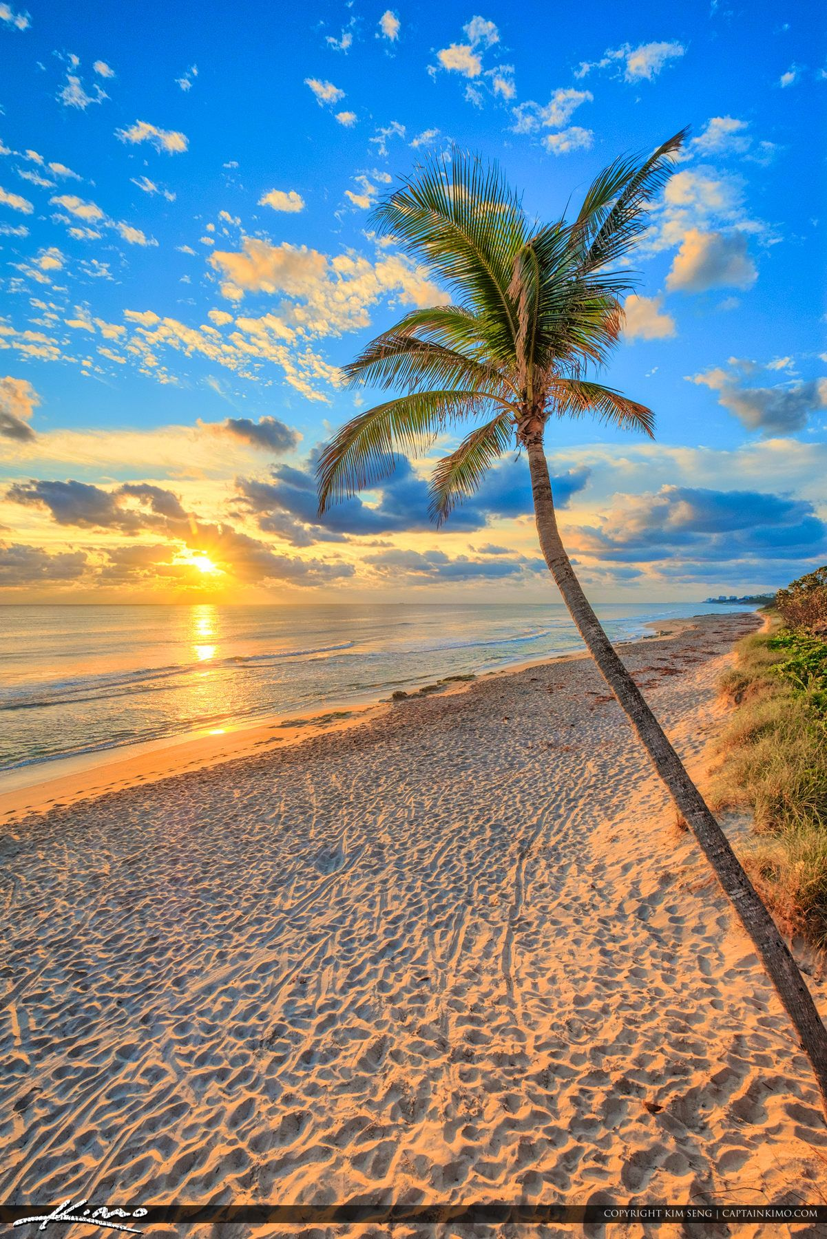 Jupiter Beach Resot Sunrise Coconut Tree At Beach