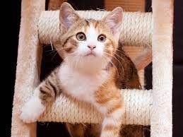 Pin Von Uschi Iseli Auf Katzen Cats 2 Katzen Seltsame Katzen