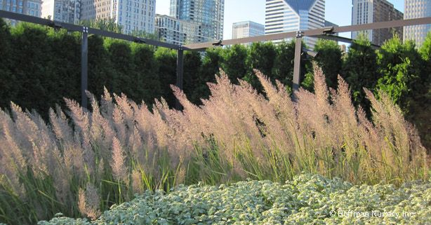 Korean Landscape Garden : Grasses garden plants ideas north america deer landscaping