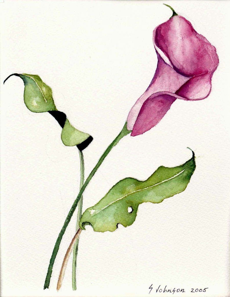 Uncategorized Calla Lily Drawings calla lily tattoo images tattoos pinterest images