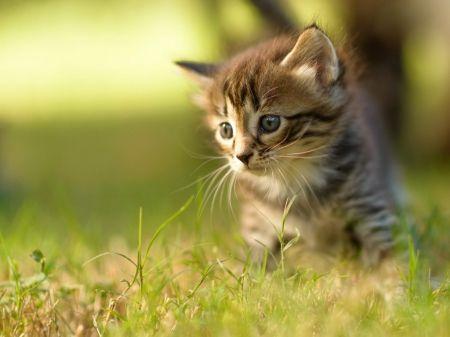 Kitty In The Garden Desktop Nexus Wallpapers Baby Cats Pictures Of Baby Cats Cute Baby Cats