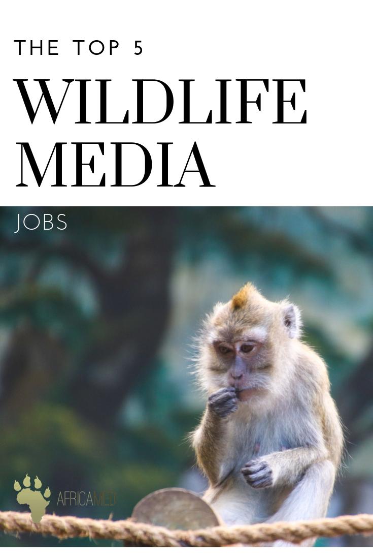 The 5 Best Wildlife Media Jobs Career Guidance From Africa Media Jobs With Animals Wildlife Wildlife Conservation