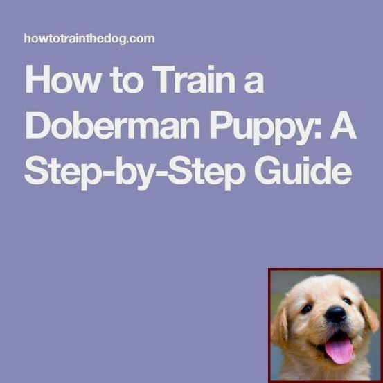 House Training A Puppy With Pads And Dog Training Courses In Delhi