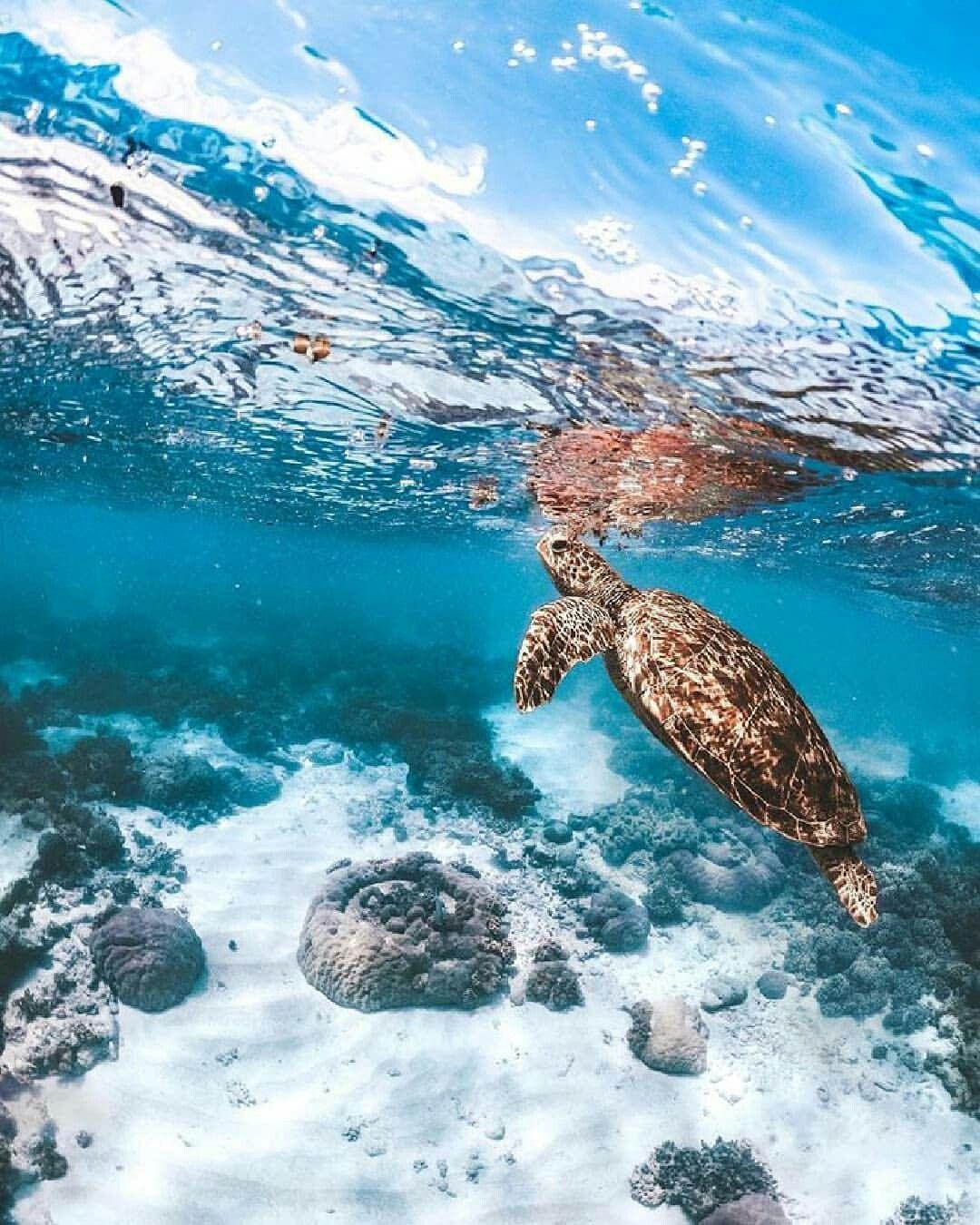Sea Turtle Great digital background idea Save the sea