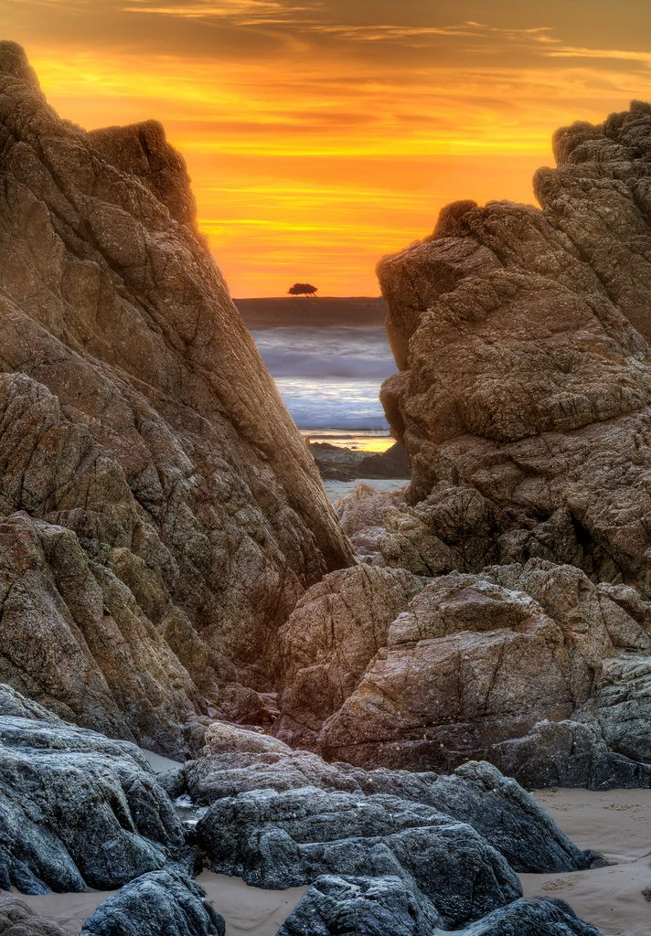 Illuminated Tree Asilomar Beach Pebble Ca By Axe Man