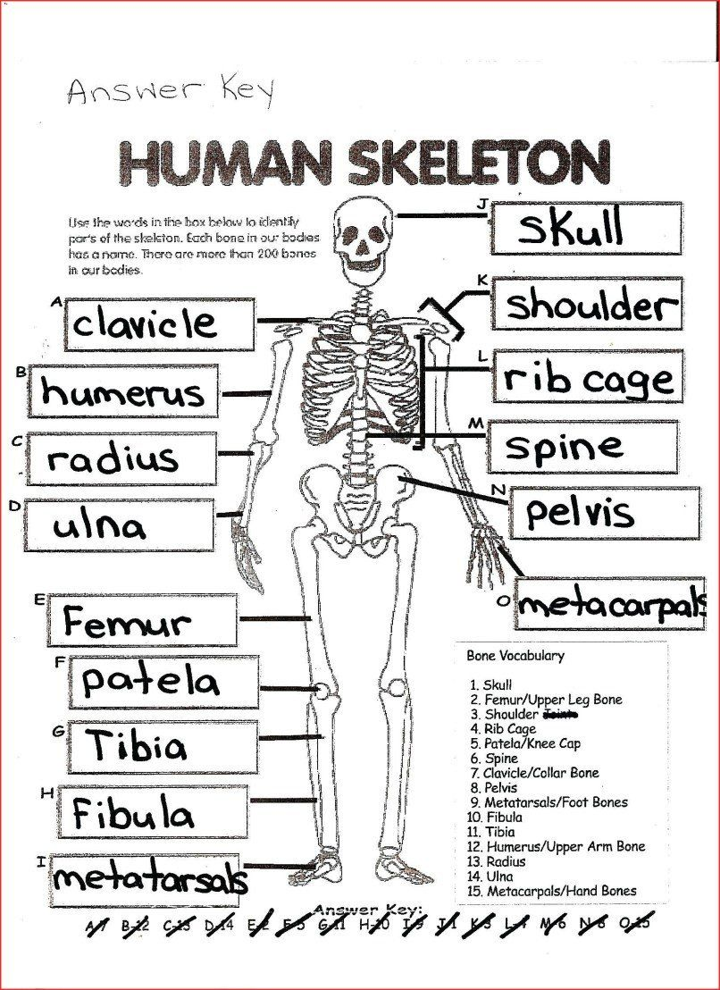 30 New Anatomy And Physiology Coloring Workbook Answers In 2020
