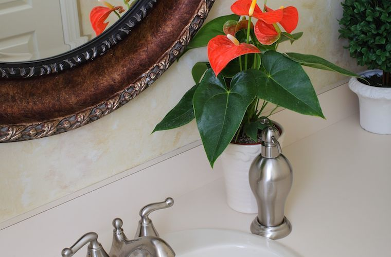 The 6 Biggest Anthurium Care Mistakes And How To Avoid Them Anthurium Care Anthurium Anthurium Plant