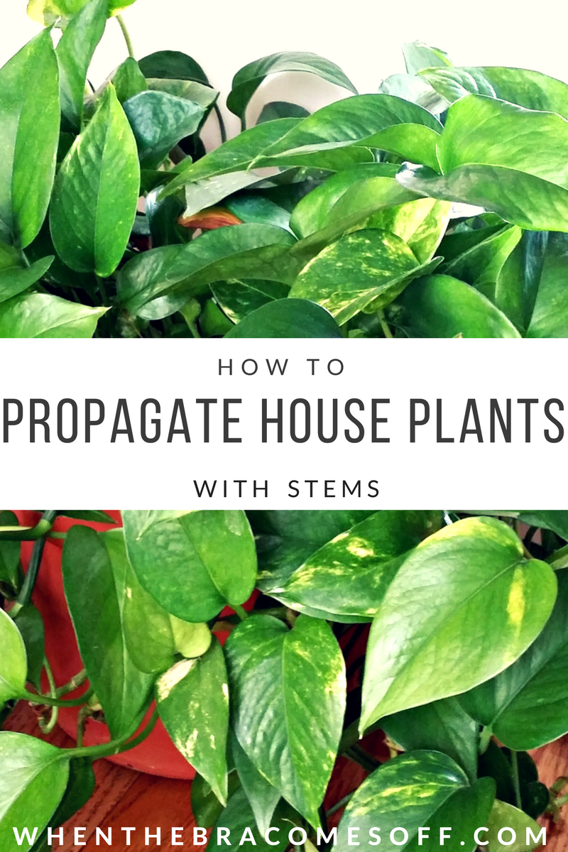 endearing house plants types. Free Plants  I use this propagation method for my common house plants They look How to Propagate Common House with Stems