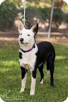 Corning Ca Border Collie Mix Meet Malcolm A Dog For Adoption Dog Adoption Border Collie Mix Collie