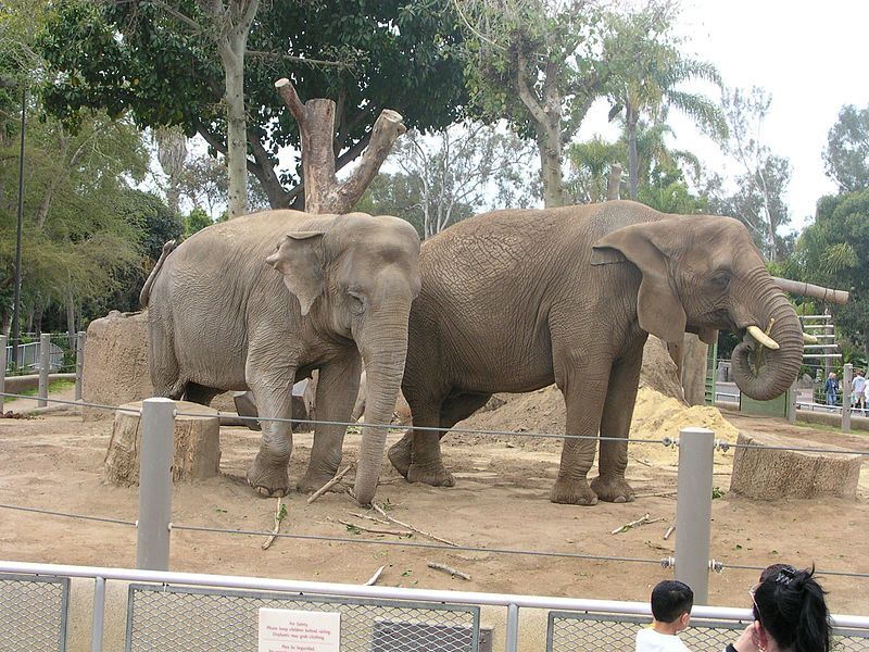 10 of the Many Reasons Why Roadside Zoos Are Bad for