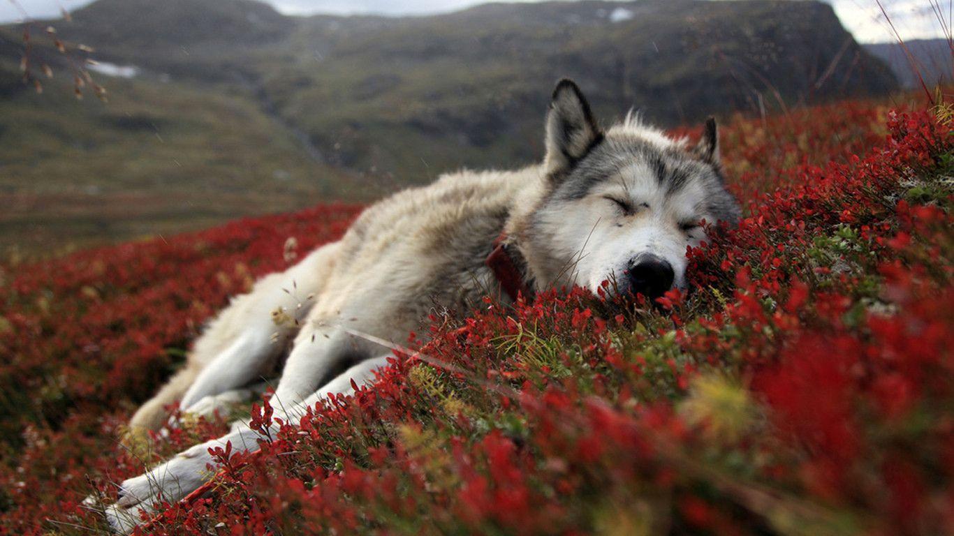 Pin by nancy seibolt on dogs pinterest animal kingdom dog and