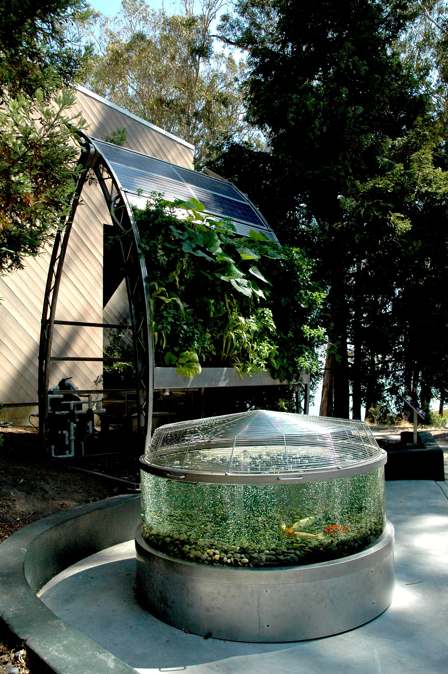 Solar powered hydroponic and aquaponic edible wall garden for Hydrokultur design