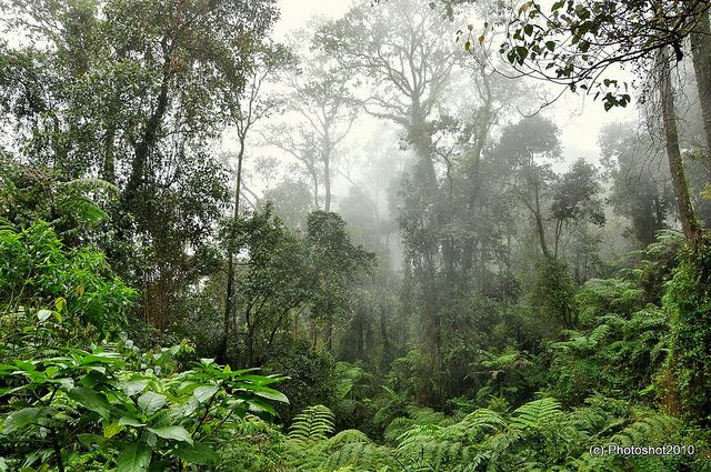 Tropical rain forest in Java, Indonesia. Home of a variety