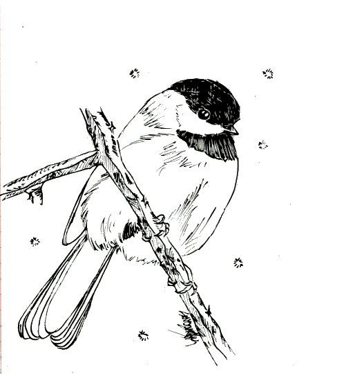 Free Bird Coloring Book From Cornell Has Nearly Every Bird In The