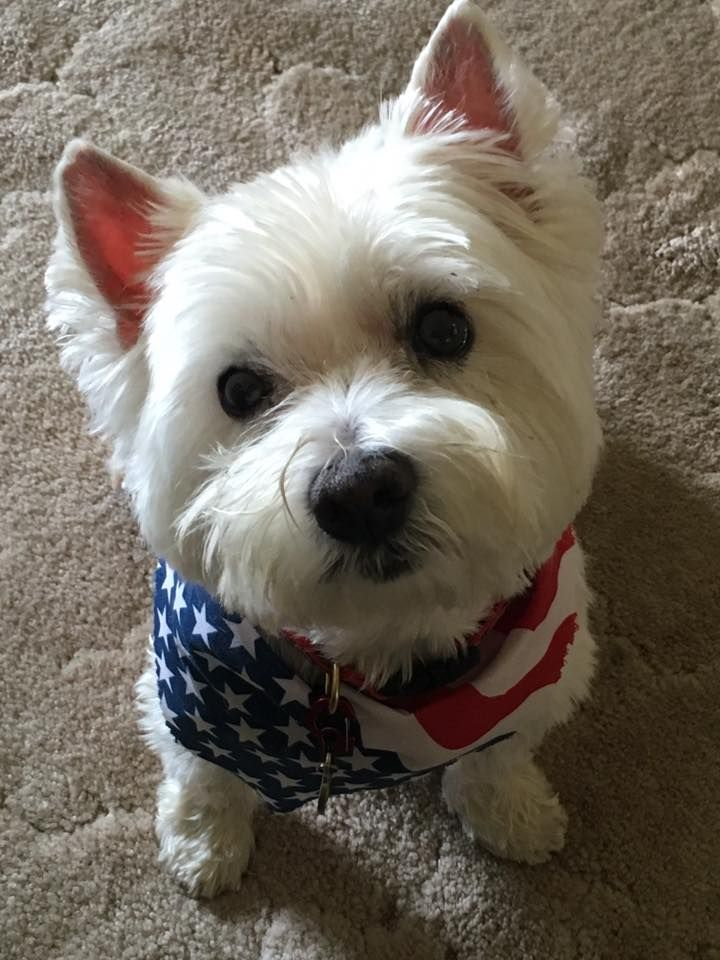 Boo Boo Wants To Wish Everyone A Happy And Safe Fourth Of July!