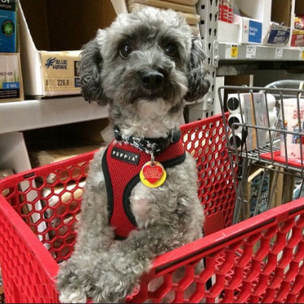34 Stores That Don't Ask You To Leave Your Dog Outside While
