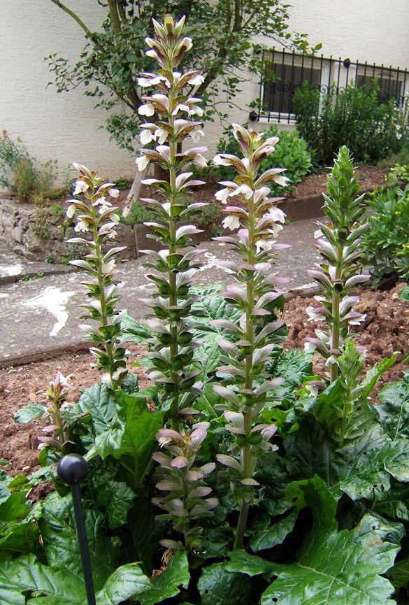 Attractive Buy Tropical Plants Online Part - 10: Online Garden U0026 Tropical Plants For Sale