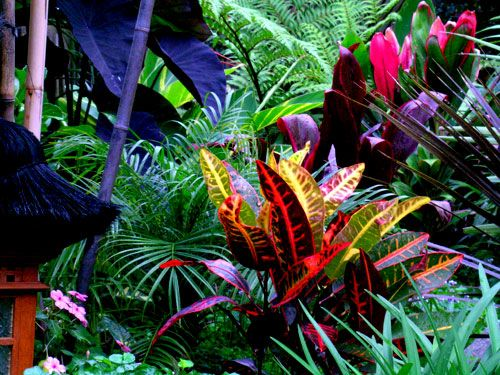 Beautiful! Love the black elephant ears with the vibrant pink and orange foliage #elephantearsandtropicals