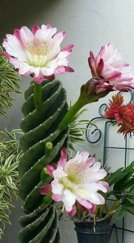 Amazing Avec Images Planter Des Arbres Fleur De Cactus