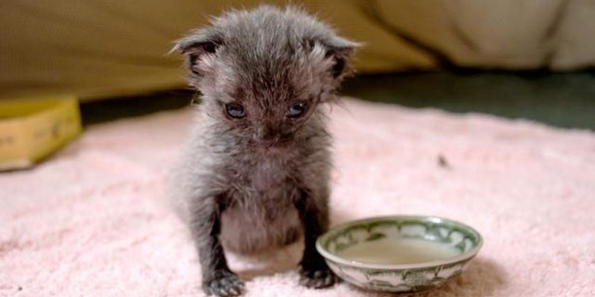 Two Months Ago A Tiny One Day Old Kitten Was Found Crawling Down The Footpath All By Himself And Soaking Wet After A Downp Newborn Kittens Kitten Baby Animals