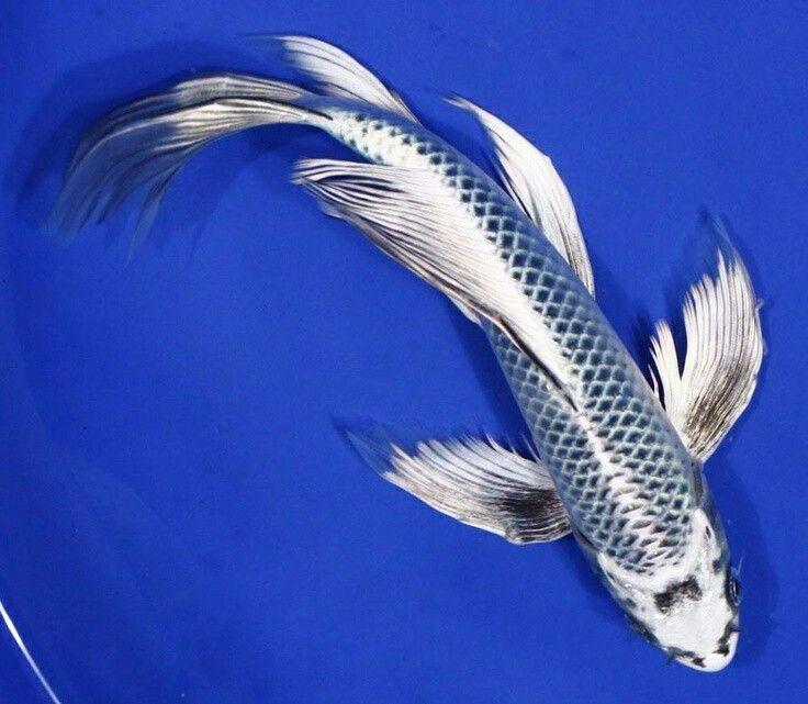Blue and white koi fish totem fish pinterest koi for Blue and white koi fish