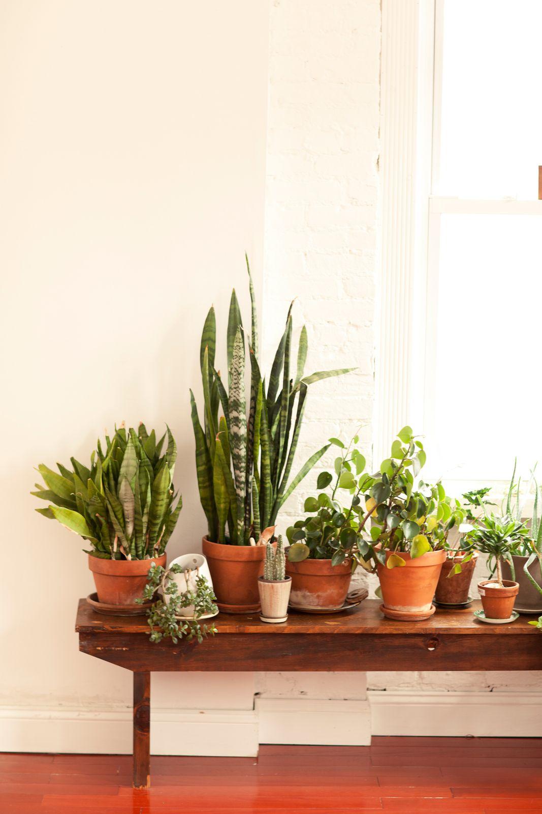 Caitlin Mociun — NYC Jewelry Designer Plant table