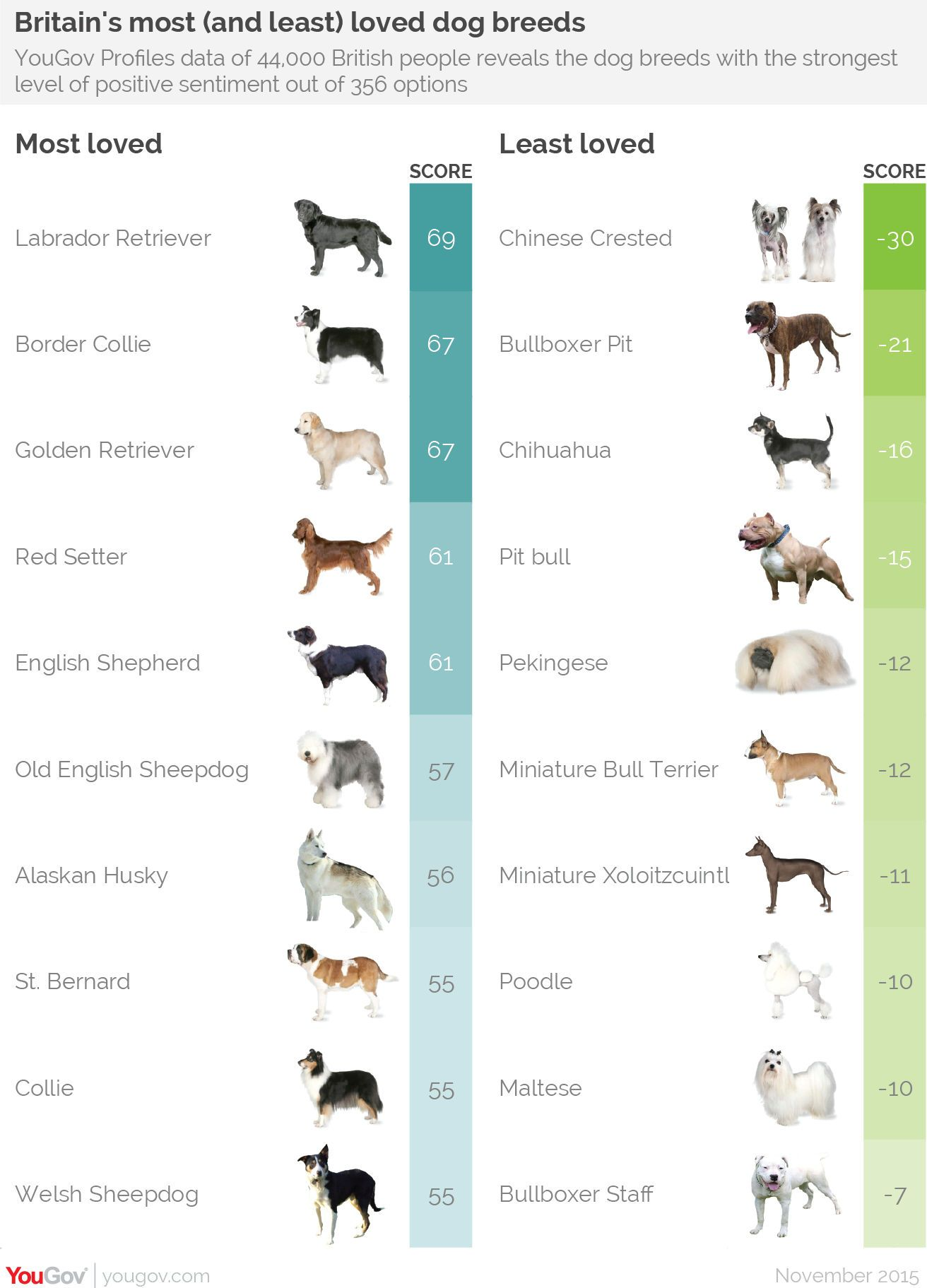 Dog Breeds Is Divided Into Two Distinct Categories