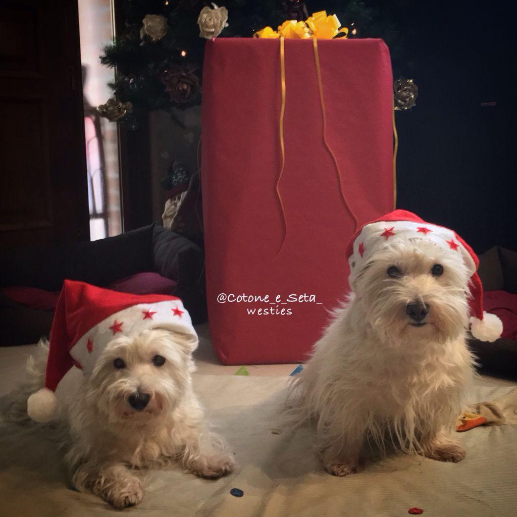 HAPPY Christmas from Cotone & Seta ️ Dog clicker
