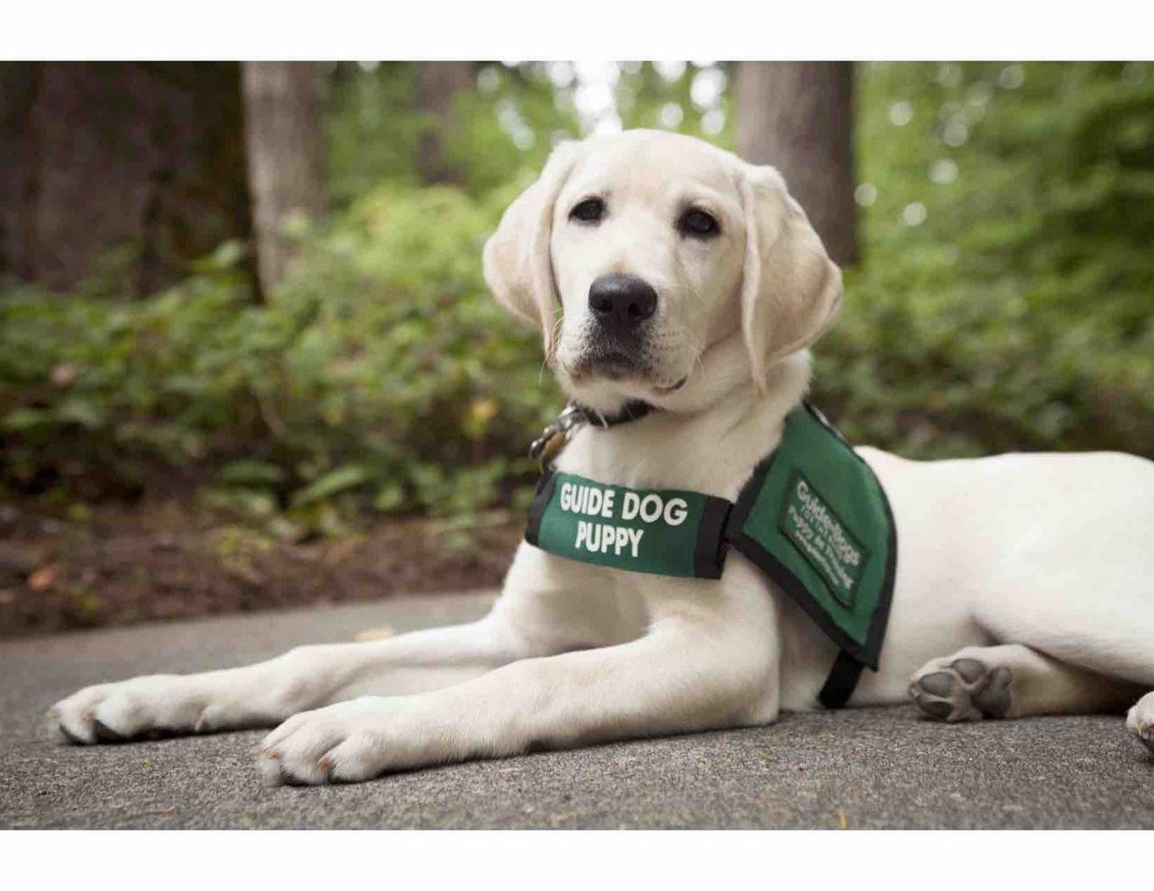 The special bond between humans and animals. It's all in this week's Whisker Fabulous post. @naturalbalance #guidedogmonth http://whiskerfabulous.com/josie-its-national-guide-dog-month/?utm_campaign=coschedule&utm_source=pinterest&utm_medium=Whisker%20Fabulous&utm_content=JOSIE%3A%20IT%27S%20NATIONAL%20GUIDE%20DOG%20MONTH