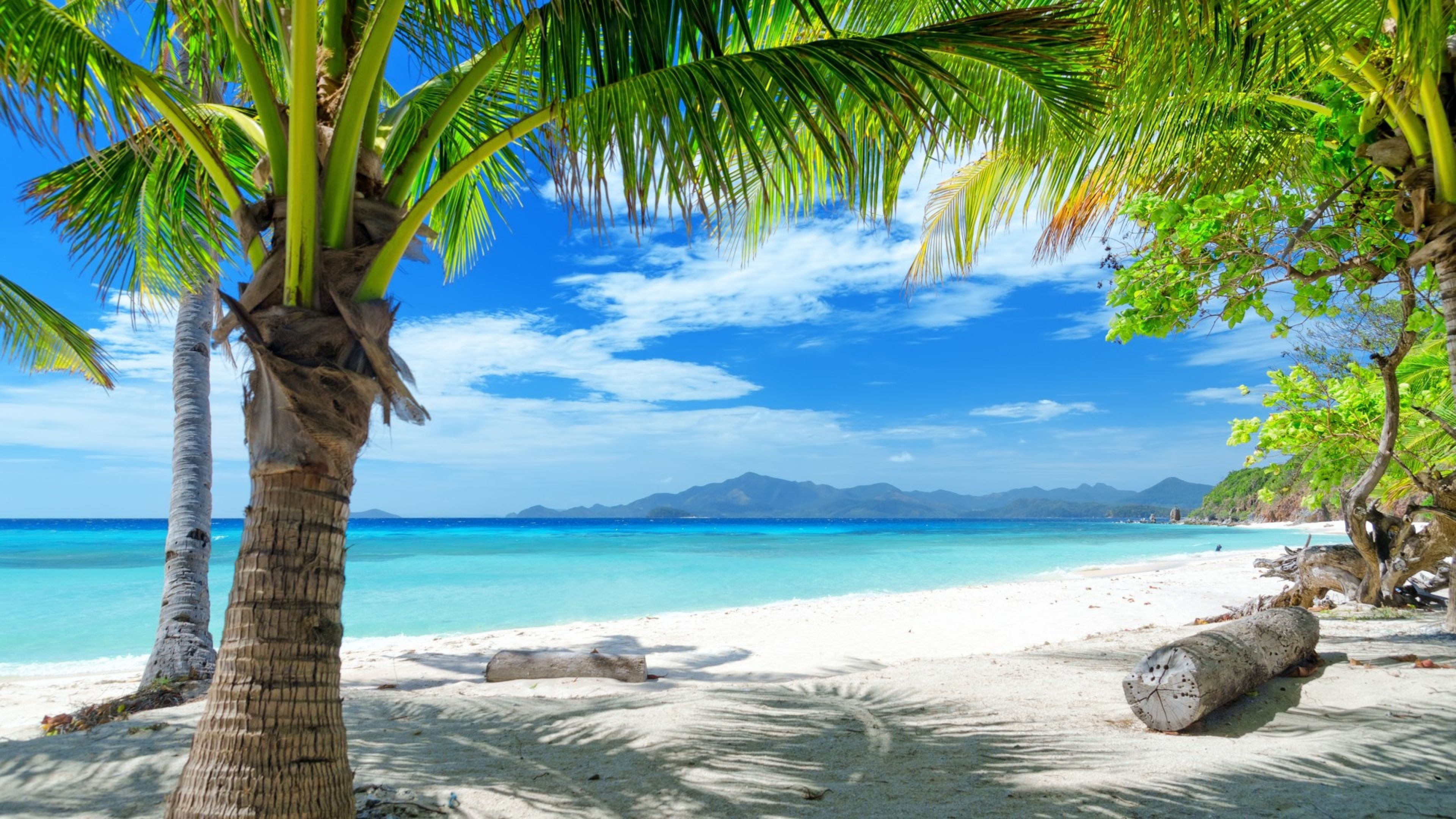 Custom Mural Wallpaper Hd Beautiful Sandy Beach Sea View: Palm Tree White Sand Beaches Wallpaper