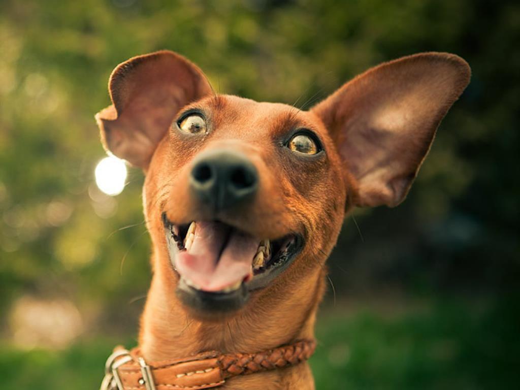 Sürekli havlayan bir köpeğin, size anlatmak istediği şeyler olabilir!  Köpeğinizin havlamasına engel olamıyorsanız, yeni blog yazımıza göz atabilirsiniz:   http://www.mamaland.com.tr/surekli-havlama