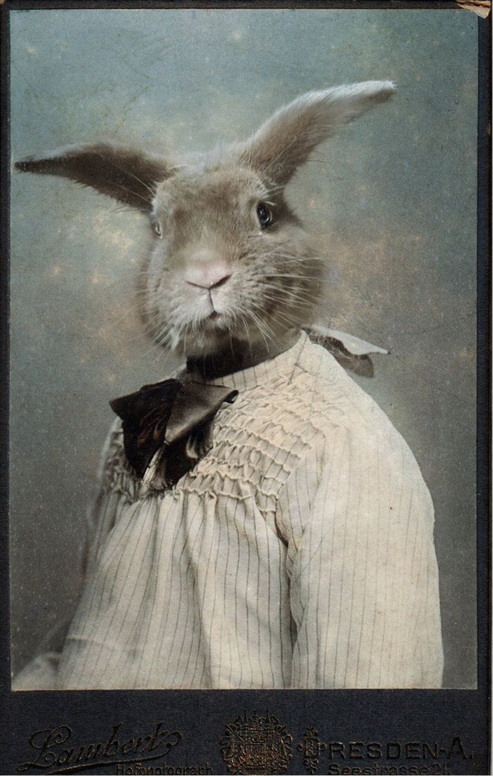 Jeannot By Lounalovegood Stock On Deviantart Animaux En Costumes Lapin Art Image Lapin