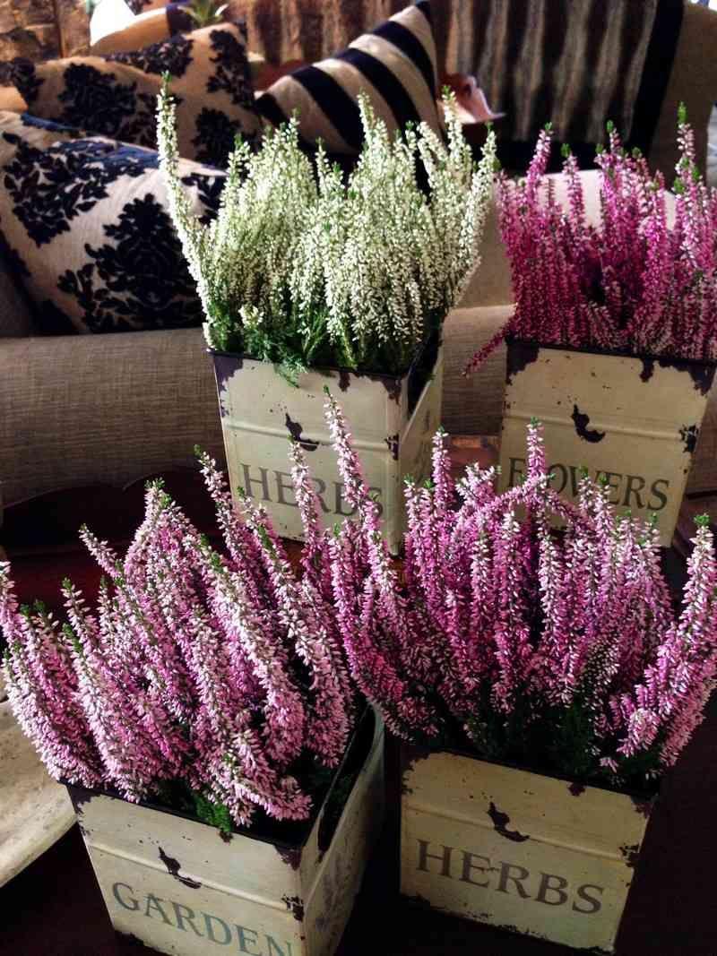 7 Fleurs Pour Balcon Qui L Egayeront Au Cours De L Hiver