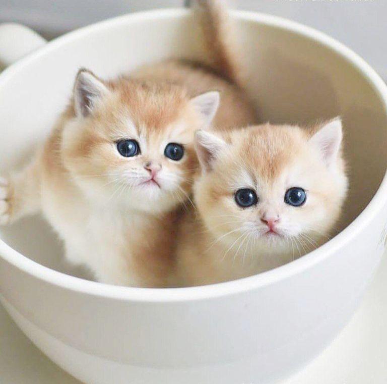 Beautiful Hd Wallpaper Download Cute Cat Images