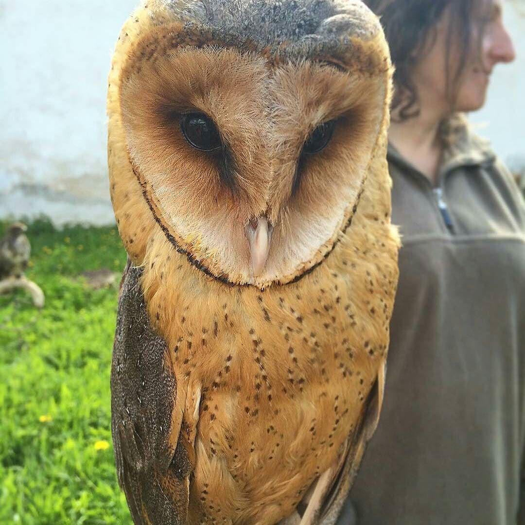 Beautiful owl. Credit :  @adela_vrancikova - . #owl #owls #owllove