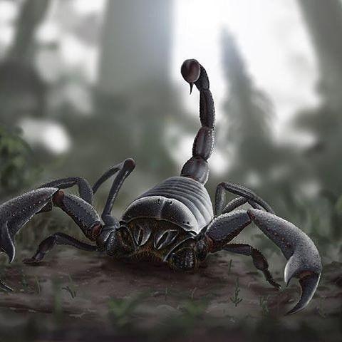 Pulmonoscorpius #Pulmonoscorpius #prehistoric #animal #scorpion #insect #prehistoricanimals