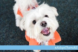 11 15 13 Nyc Aspca Pet Of The Week Dream Happy White Dog Wearing Orange Sweater Pets Dog Wear Aspca