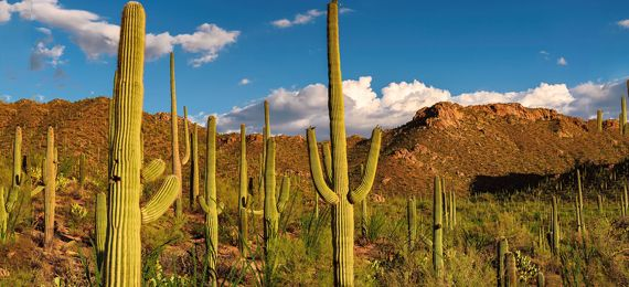 Photo of These 10 Saguaro Cactus Facts Will Blow Your