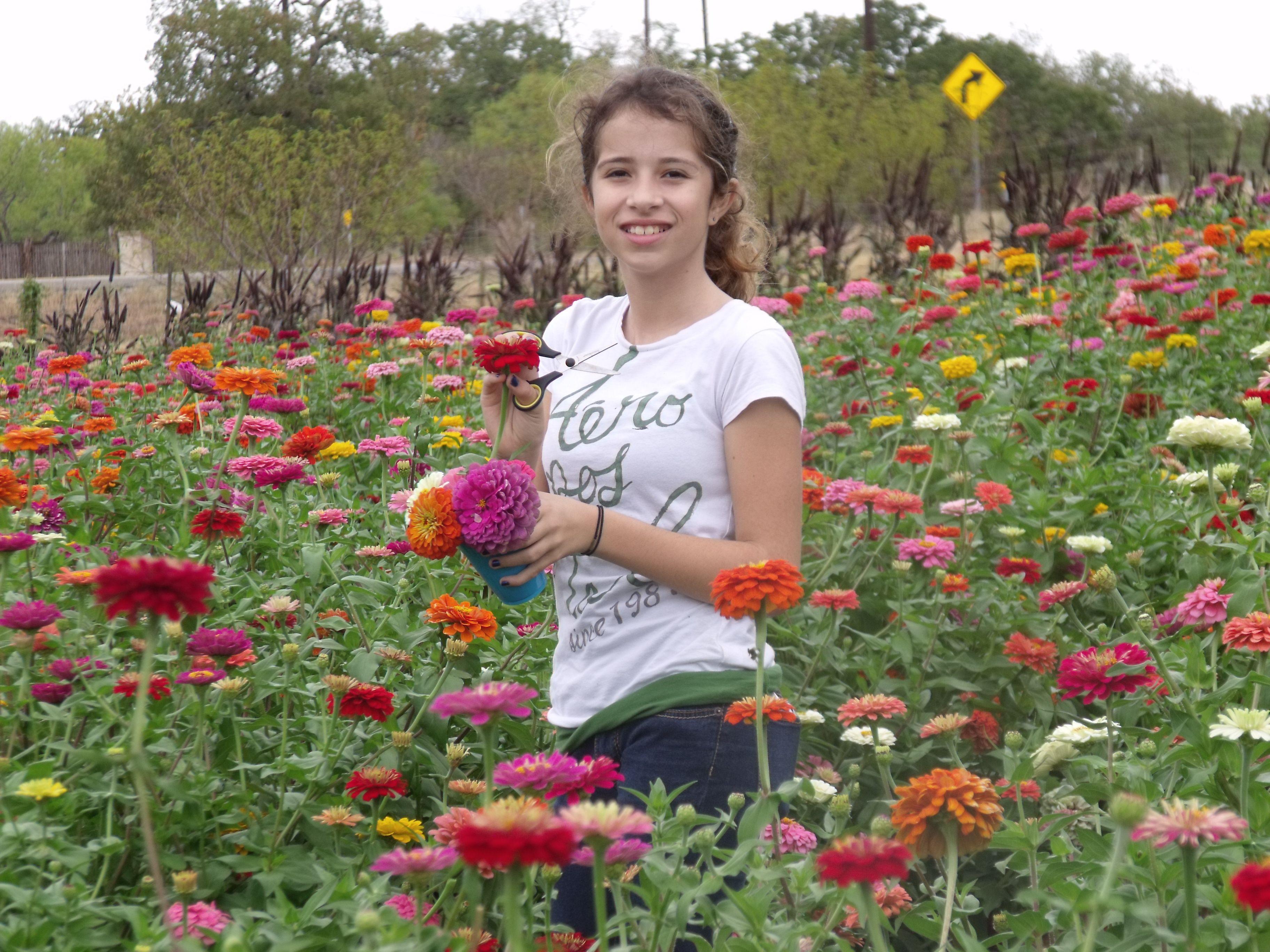 Sweet Berry Farms Marble Falls Tx Pick Your Own Sun Flowers Zennias Mums Native Texan Marble Falls Flowers