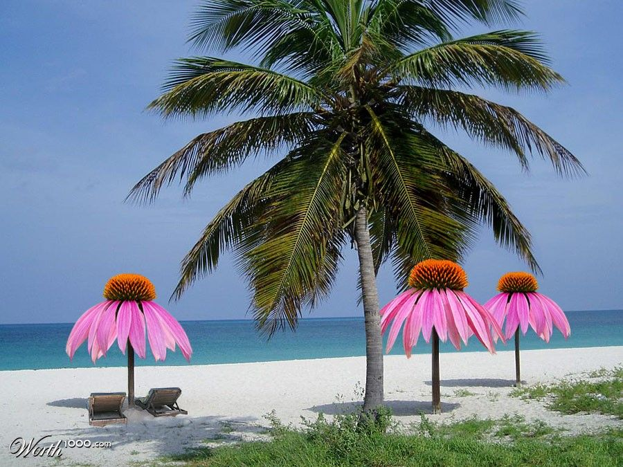 To The Flower Beach Umbrella We Can Dream Up Anything It S Photo