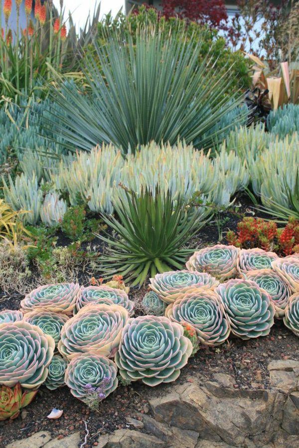 palmlilie eine bezaubernde zier und nutzpflanze. Black Bedroom Furniture Sets. Home Design Ideas