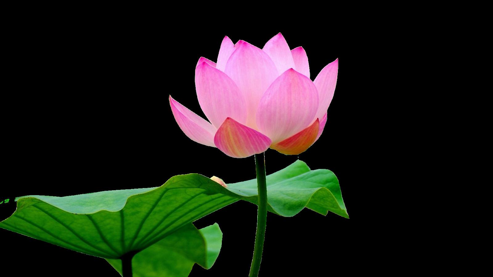 lotus Flower frame, Wedding frames, Marriage frame